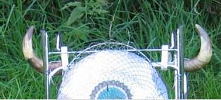 Artenschutz à la Ines Braun