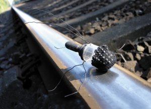 insecta urba schwarzfahrerklein.jpg