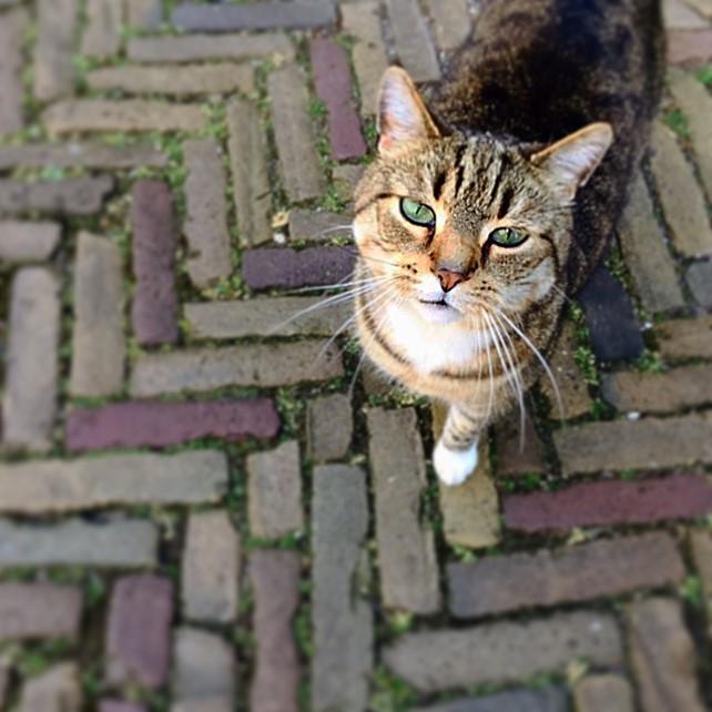 Catcontent oder Kulturblogs? Ein Kätzchen als Symbol für die Relevanz der Beiträge auf Kulturblogs